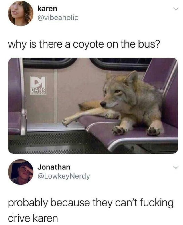 Photo caption - karen @vibeaholic why is there a coyote on the bus? DANK MEMEOLODY Jonathan @LowkeyNerdy probably because they can't fucking drive karen