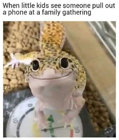Amphibian - When little kids see someone pull out a phone at a family gathering 10