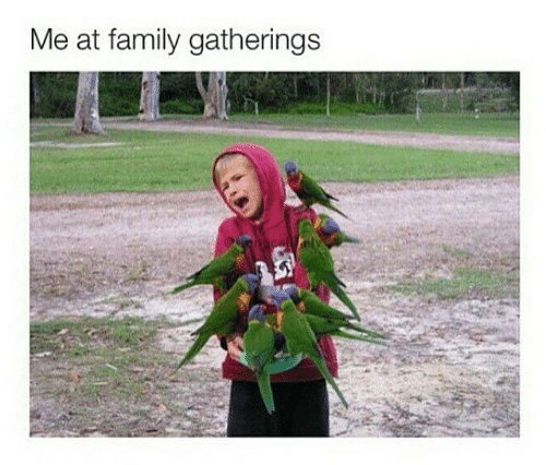 "Caption that reads, ""Me at family gatherings"" above a pic of a bunch of birds perched on a little boy who looks terrified of said birds"