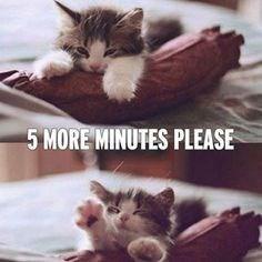 Cat - 5 MORE MINUTES PLEASE