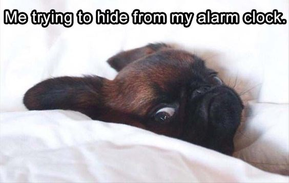 Dog breed - Me trying to hide from my alarm clock.