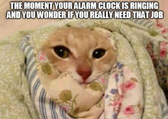 Cat - THE MOMENT YOURALARMCLOCKISRINGING AND YOUWONDERIFYOUREALLY NEED THATJOB