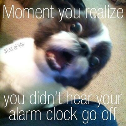 Canidae - Moment you realize HLeLePets you didp't hear your alarm clock go ON