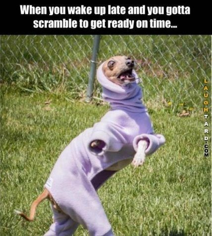 Canidae - When you wake up late and you gotta scramble to get ready on time... A UGH TARD-COs