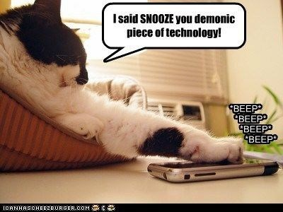 Cat - Isaid SNOOZE you demonic niece of technology! BEEP ЧВЕЁРР BEEP ЧВЕЕР CRNHASCHEE2EURGER.COM