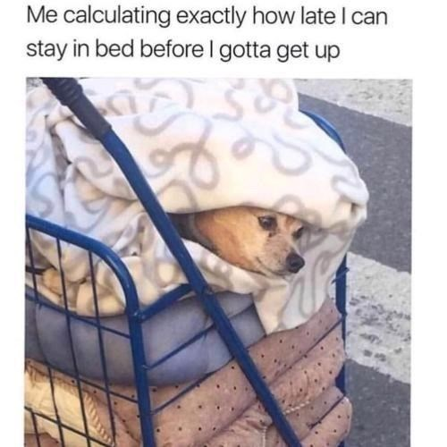 Dog - Me calculating exactly how late I can stay in bed beforel gotta get up