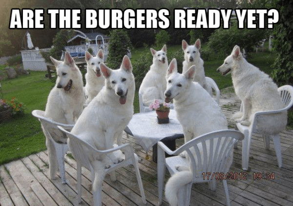 Cheezburger Image 9234670592