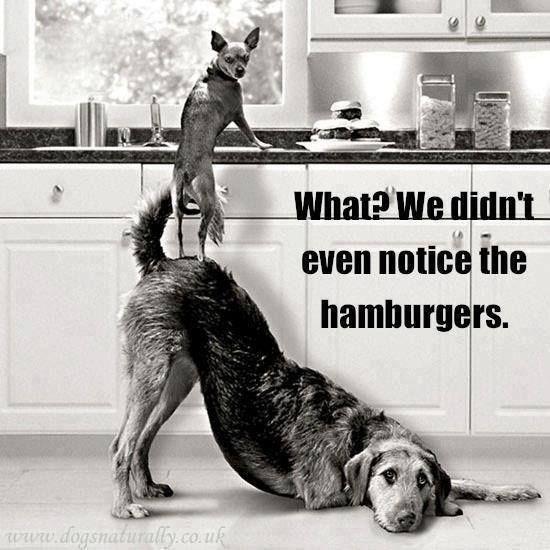 Cheezburger Image 9234671616