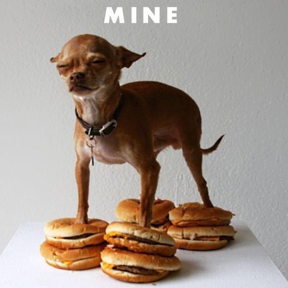 Cheezburger Image 9234672128