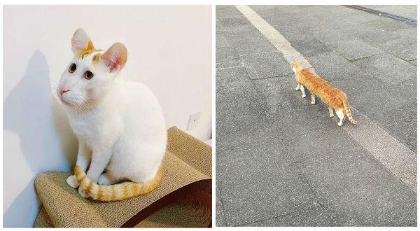 panoramic photos panoramic cat photos funny photos Cats animals - 9234693