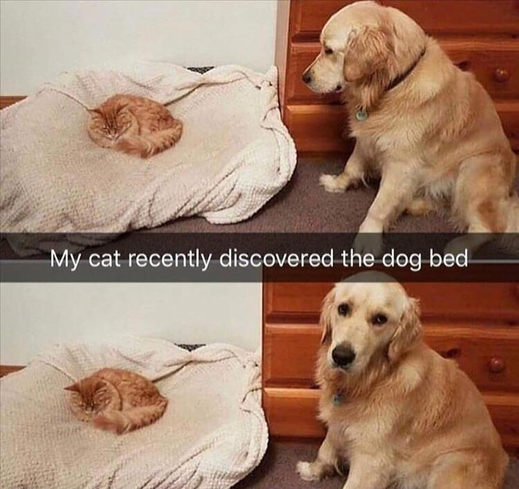 Dog - My cat recently discovered the dog bed