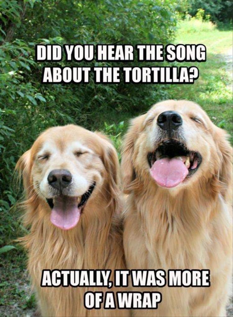 Dog - DIDYOU HEAR THE SONG ABOUT THE TORTILLA? ACTUALLY, IT WAS MORE OFA WRAP