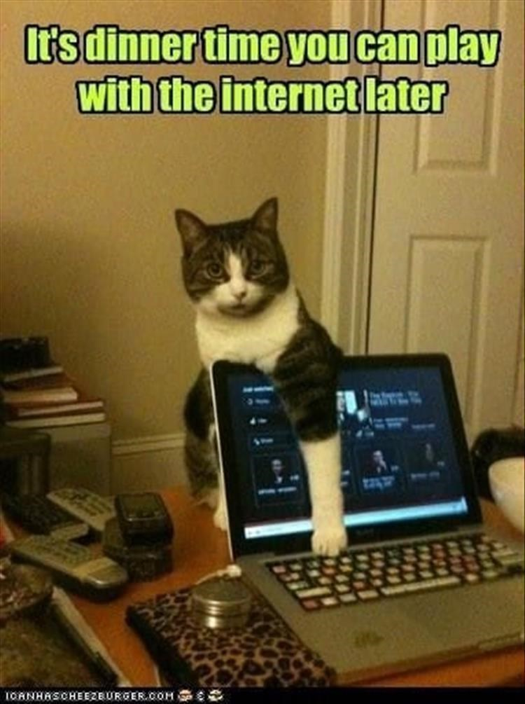 Cat - Ir's dinner time you can play with the internet later 1OANHASCHEEZEURGERCOH