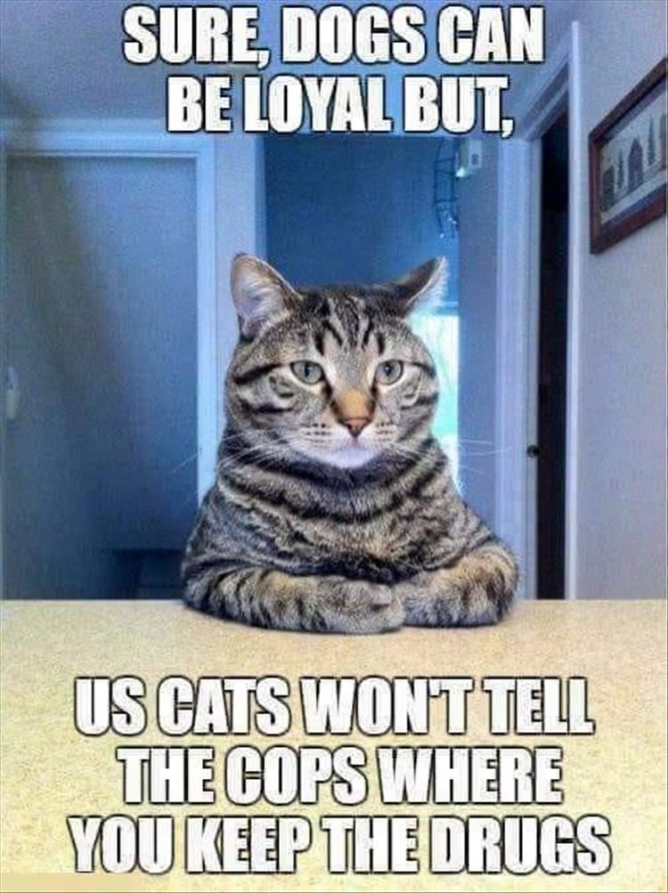 Cat - SURE, DOGS CAN BE LOYAL BUT US CATS WON'T TELL THE COPS WHERE YOU KEEP THE DRUGS