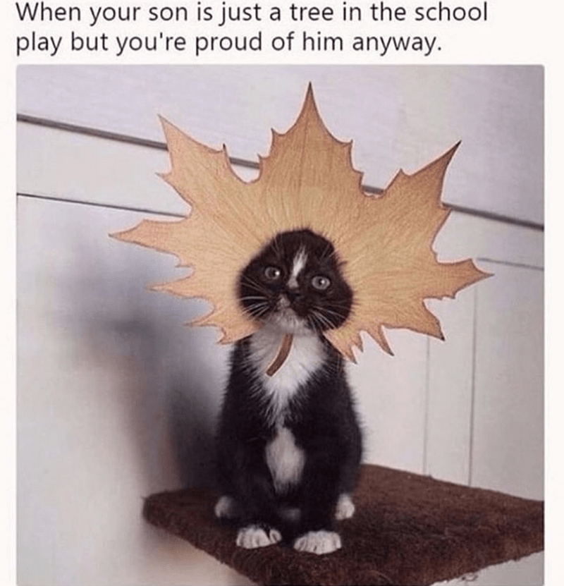Cat - When your son is just a tree in the school play but you're proud of him anyway.