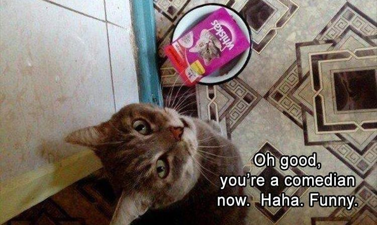 Cat - Oh good, you're a comedian now. Haha. Funny whiskas