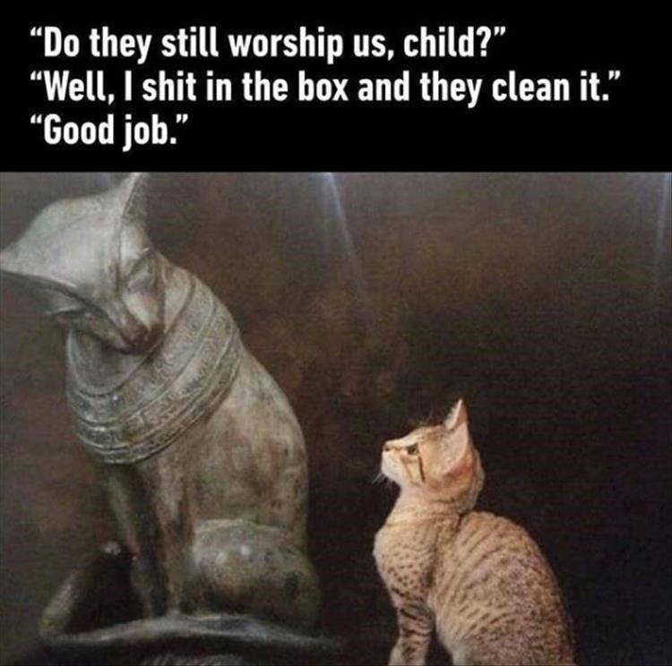 """Cat - """"Do they still worship us, child?"""" """"Well, I shit in the box and they clean it."""" """"Good job."""""""