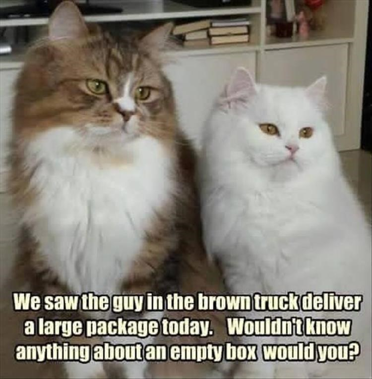Cat - We saw the guy in the brown truckdeliver a large package today. Wouldn'tknow anything about an empty box would you?