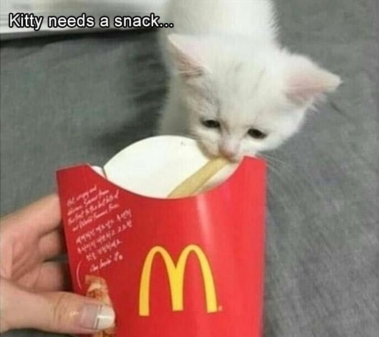 Cat - Kitty needs a snack... fthth