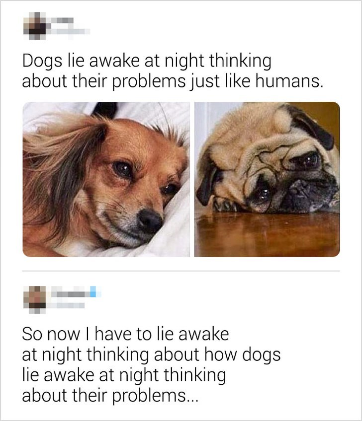 "Tweet that reads, ""Dogs lie awake at night thinking about their problems just like humans;"" someone comments below, ""So now I have to lie awake at night thinking about how dogs lie awake at night thinking about their problems..."""