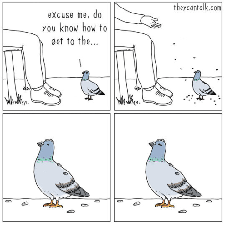 comic about a pigeon trying to ask a question but gets food instead