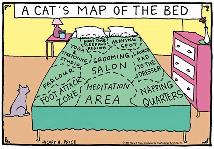 comic about a cats map of a bed and what each part means