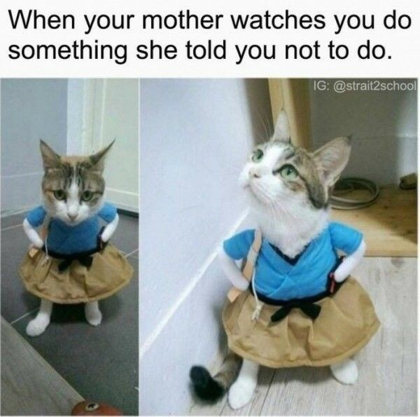"Caption that reads, ""When your mother watches you do something she told you not to do"" above pics of a cat wearing a little costume that has hands on hips"