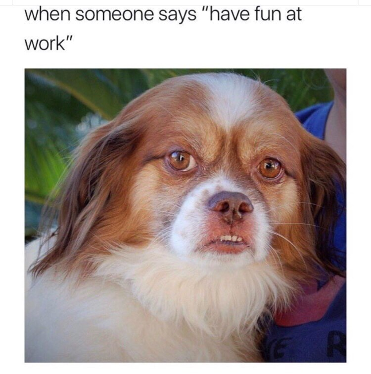 "Caption that reads, ""When someone says 'Have fun at work'"" above a pic of a little dog appearing to make an annoyed face"