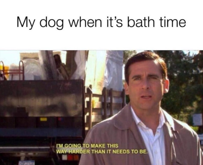 Michael from The Office as a dog making bathing too difficult