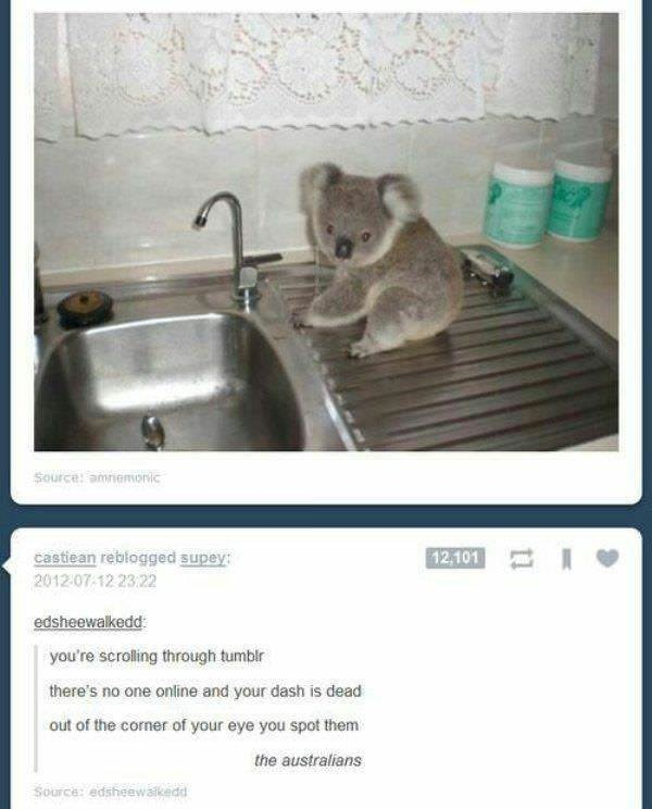 australia - Kitchen sink - Source: amnemonic 12,101 castiean reblogged supey: 2012:07-12 23:22 edsheewalkedd you're scrolling through tumblr there's no one online and your dash is dead out of the corner of your eye you spot them the australians Source: edsheewalkedd