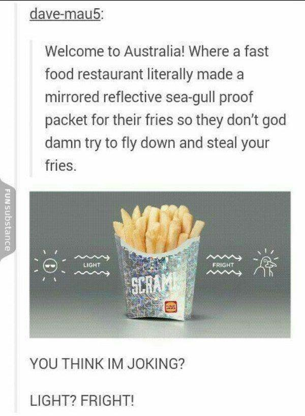 australia - Food - dave-mau5: Welcome to Australia! Where a fast food restaurant literally made mirrored reflective sea-gull proof packet for their fries so they don't god damn try to fly down and steal your fries. FRIGHT LIGHT SCRAM ANC YOU THINK IM JOKING? LIGHT? FRIGHT! FUNSUbstance