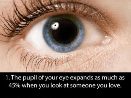 Eye - 1. The pupil of your eye expands as much as 45% when you look at someone you love.