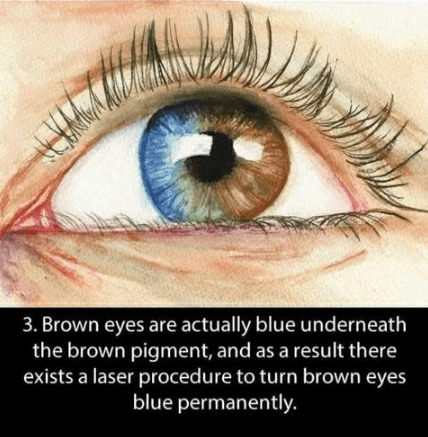 Eye - 3. Brown eyes are actually blue underneath the brown pigment, and as a result there exists a laser procedure to turn brown eyes blue permanently