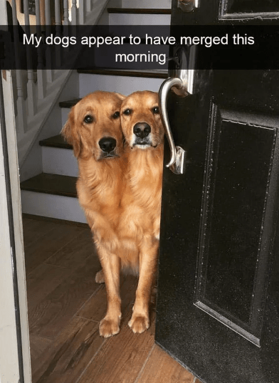 Dog - My dogs appear to have merged this morning