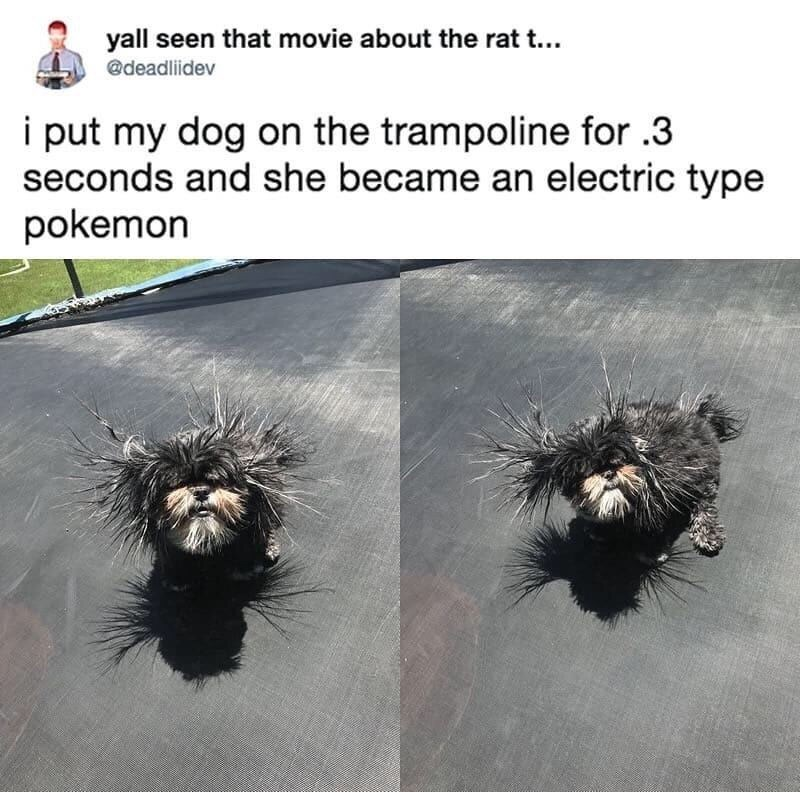 Tweet about dog becoming an electric type pokemon with picture of dog with its fur sticking out due to static