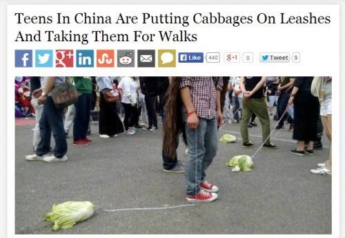 "Headline that reads, ""Teens in China are putting cabbages on leashes and taking them for walks"""
