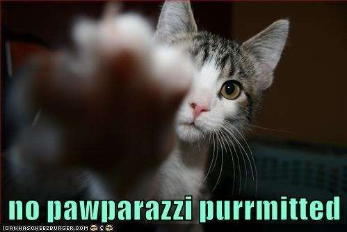 No pawparazzi purrmitted