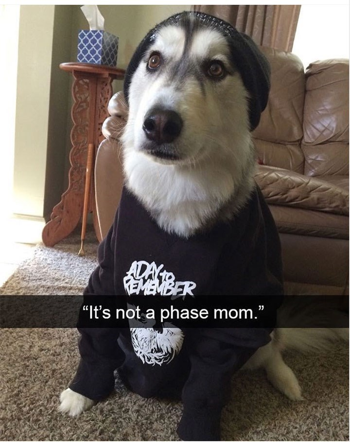 dog meme wearing a band t-shirt saying 'it's not a phase mom'