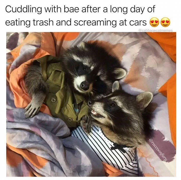 meme image of raccoons cuddling after a long day