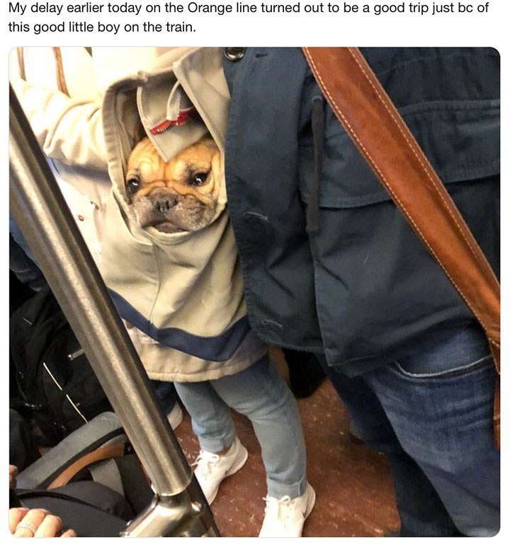 dog meme about getting delayed on a train but then seeing a cute dog so it's alright