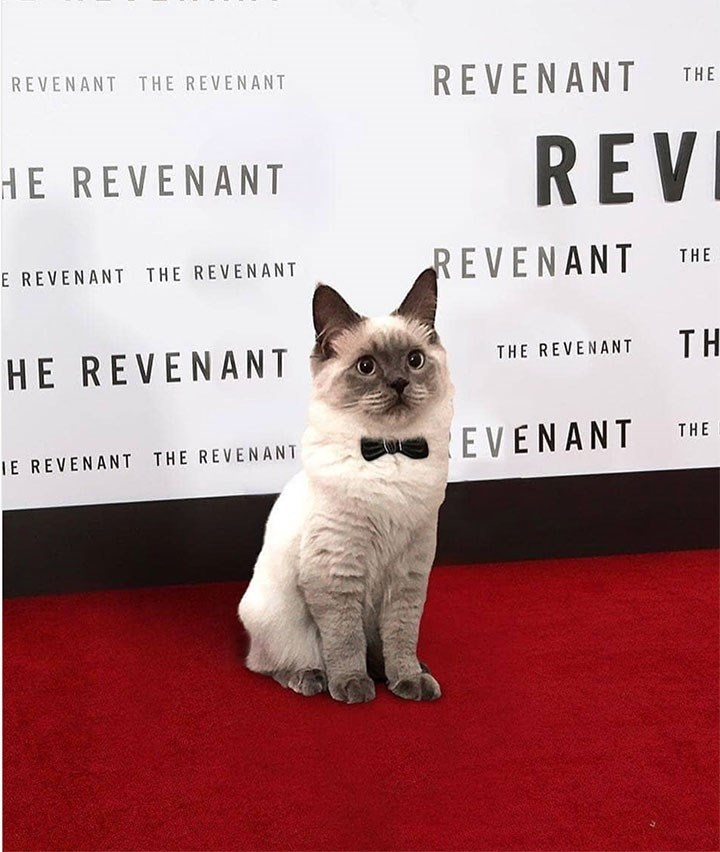 cat meme at a revenant red carpet event wearing a bow-tie