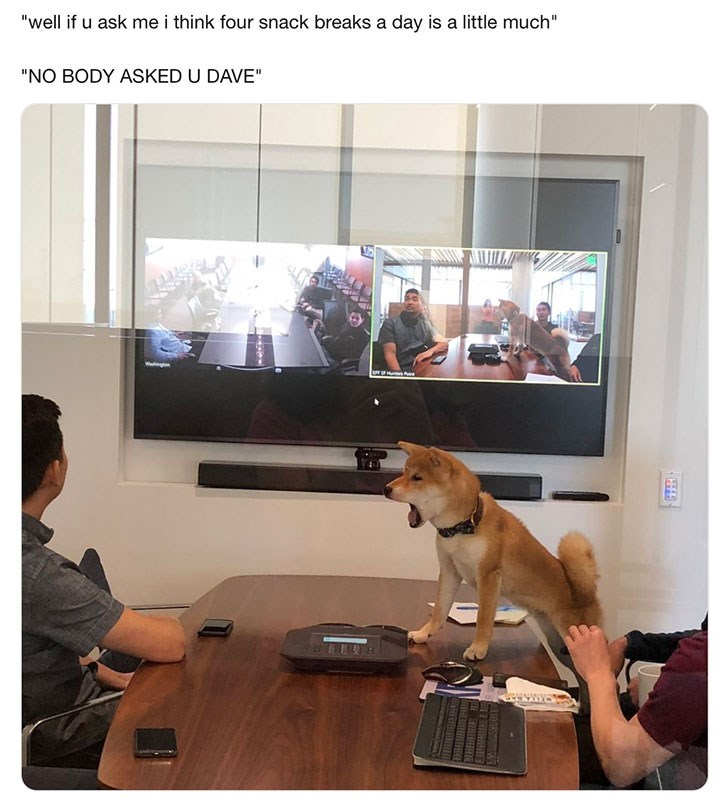 dog meme about how four snack breaks for a dog is too much