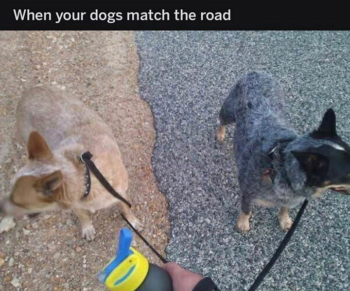 meme image of dogs who match the road