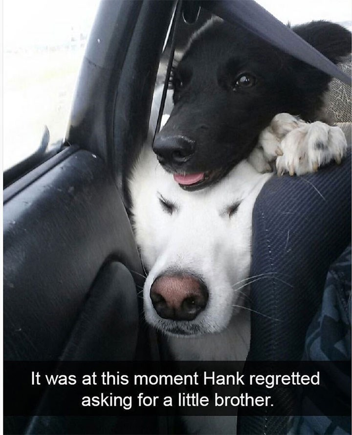 dog meme about regretting asking for a little brother