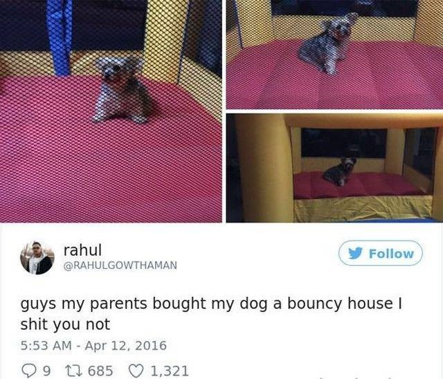 Furniture - rahul Follow @RAHULGOWTHAMAN guys my parents bought my dog a bouncy house I shit you not 5:53 AM Apr 12, 2016 9 685 1,321