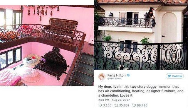 Pink - Paris Hilton OParisHton Follow My dogs live in this two-story doggy mansion that has air conditioning, heating, designer furniture, and a chandelier. Loves it 2:01 PM Aug 25, 2017 3,156 t35.882 98,496