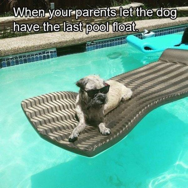 Dog - When your parents let the dog have the last pool float