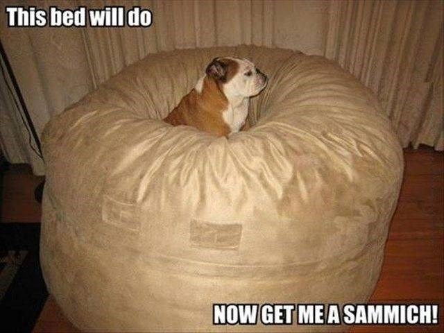Furniture - This bed will do NOW GET ME A SAMMICH!