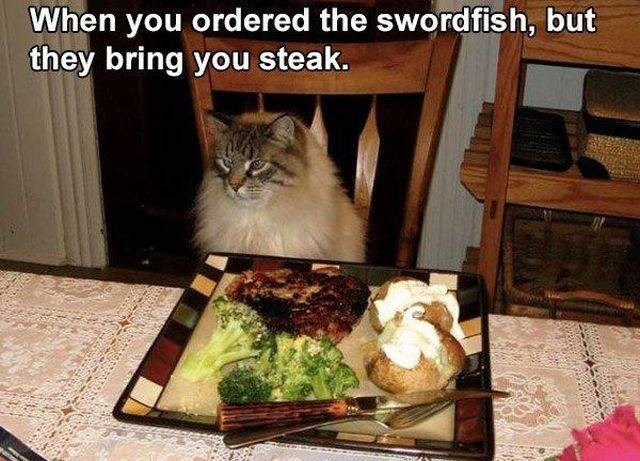 Cat - When you ordered the swordfish, but they bring you steak.