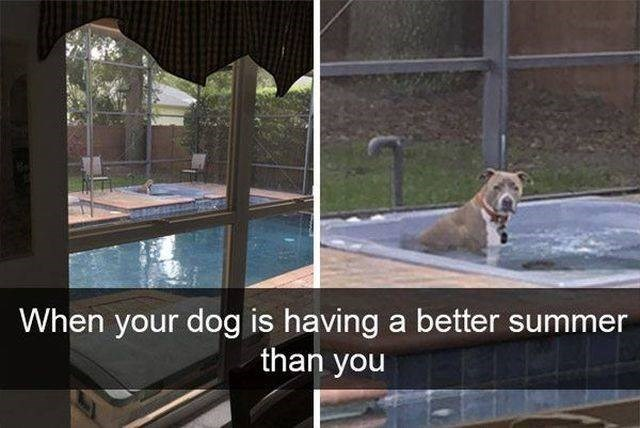 Property - When your dog is having a better summer than you